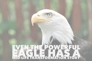 The story of an eagle's transformation